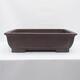 Outdoor bonsai -Malus Halliana - fruited apple - 1/5