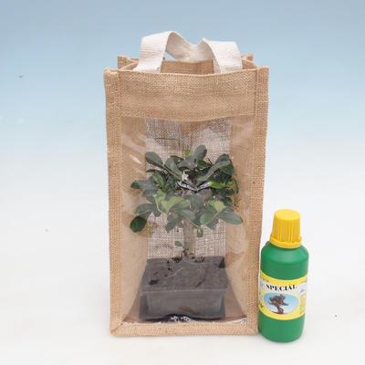 Room bonsai in a gift bag - JUTA - 1