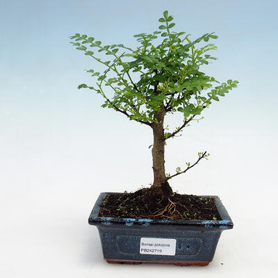 Ceramic bonsai bowl 7.5 x 6.5 x 3.5 cm, yellow color - 1