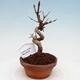 Ceramic bonsai bowl 21 x 17 x 7 cm, color green - 1/4