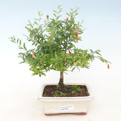 Mini bonsai bowl 3 x 2.5 x 1.5 cm, color yellow - 1