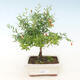 Mini bonsai bowl 3 x 2.5 x 1.5 cm, color yellow - 1/3