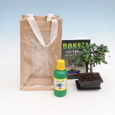 Room bonsai in a gift bag - JUTA