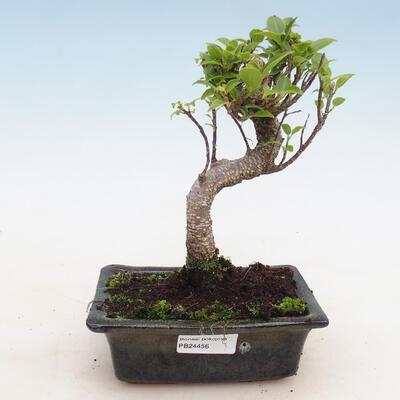 Ceramic bonsai bowl 10.5 x 10.5 x 4 cm, color green - 1