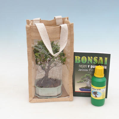 Room bonsai in a gift bag - JUTA - 1