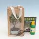 Room bonsai in a gift bag - JUTA - 1/2