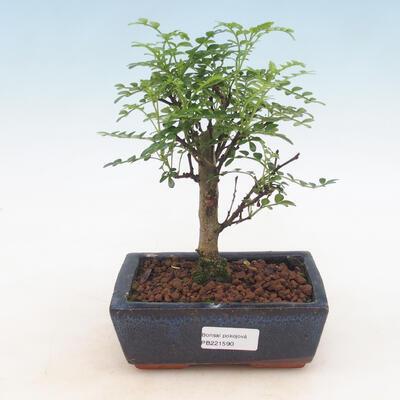 Ceramic bonsai bowl 21.5 x 21.5 x 6.5 cm, brown color - 1