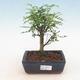 Ceramic bonsai bowl 21.5 x 21.5 x 6.5 cm, brown color - 1/3