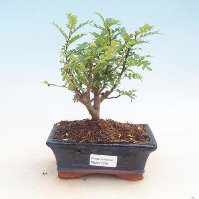 Ceramic bonsai bowl 20 x 20 x 6 cm, color green - 1