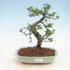 Ceramic bonsai bowl 23.5 x 23.5 x 7 cm, beige color - 1/3