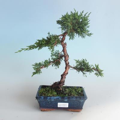Outdoor bonsai - Juniperus chinensis - Chinese juniper 408-VB2019-26742