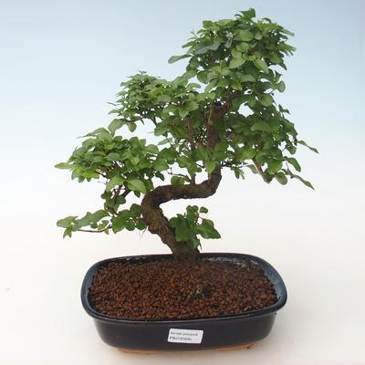 Ceramic bonsai bowl 22 x 16 x 2,5 cm, color green - 1
