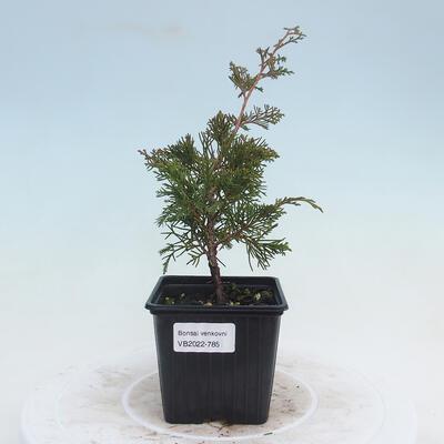 Outdoor bonsai - Blood Currant - Ribes sanguneum VB2020-785 - 1