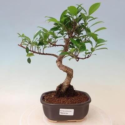 Ceramic bonsai bowl 19 x 19 x 6.5 cm, color cracked red - 1