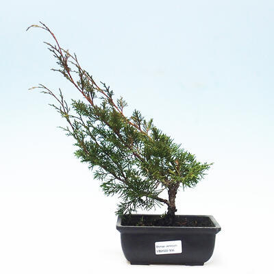 Ceramic bonsai bowl 11 x 11 x 12 cm, gray color - 1