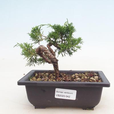 Outdoor bonsai - Juniperus chinensis Itoigawa-Chinese juniper - 1