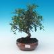 Room bonsai-pistachios - 1/3