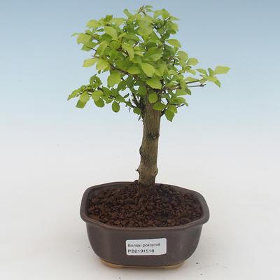 Ceramic bonsai bowl 22 x 16 x 2,5 cm, color gray - 1