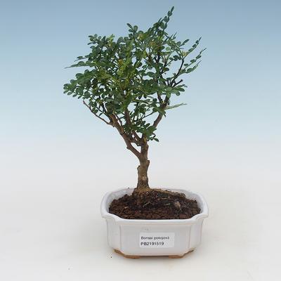 Ceramic bonsai bowl 19 x 19 x 6 cm, color gray - 1