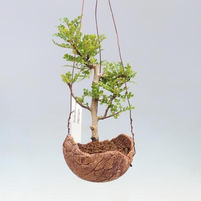 Bonsai bowl 30 x 23 x 8.5 cm, gray-beige color - 1