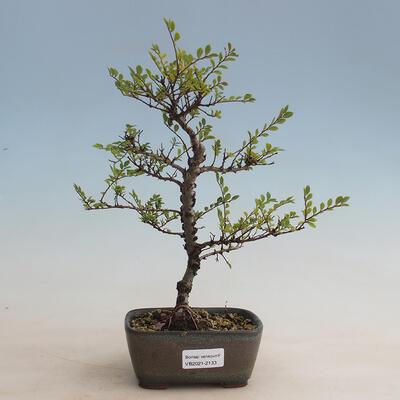 Ceramic bonsai bowl 15.5 x 15.5 x 5 cm, cracked color - 1