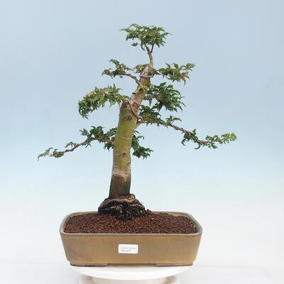Ceramic bonsai bowl 12 x 11 x 3 cm, color blue - 1
