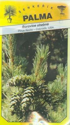 Flexible Pine - Pinus flexilis