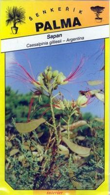 Sapan - Caesalpinia gilliesii