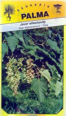 Rooflike Maple - Acer tegmentosum