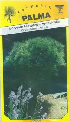 Pine silky eastern white pine - Pinus strobus