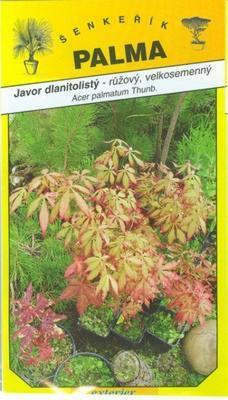 Pink Japanese Maple - Acer palmatum Thunb.