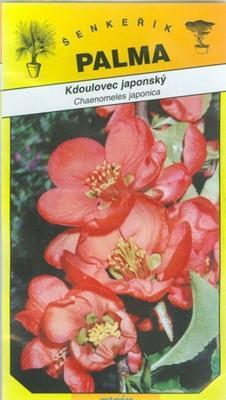 Japanese quince - Chaenomeles japonica