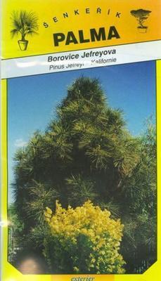 Jefreyova Pine - Pinus Jefreyi