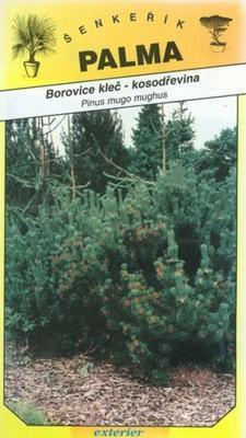 Kleč- scrub pine - Pinus mugo mugnus