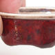 Mini bonsai bowl 4.5 x 3.5 x 2 cm, color red - 2/3