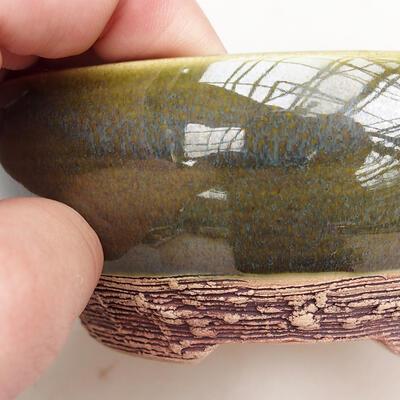 Outdoor bonsai - Hornbeam - Carpinus betulus - 2