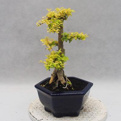 Ceramic bonsai bowl 22,5 x 22,5 x 22 cm brown-green color - 2