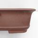Outdoor bonsai -Malus Halliana - fruited apple - 2/4