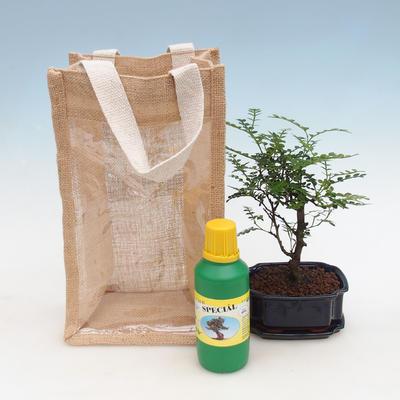 Room bonsai in a gift bag - JUTA - 2