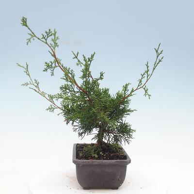 Ceramic bonsai bowl 10 x 10 x 3 cm, color green - 2