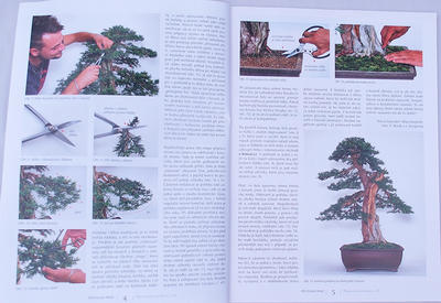 Bonsai and Japanese Garden No.48 - 2