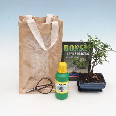 Room bonsai in a gift bag - JUTA - 2