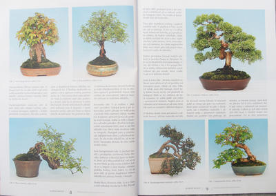 Bonsai and Japanese Garden No.51 - 2