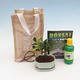 Room bonsai in a gift bag - JUTA - 2/2