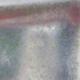 Outdoor bonsai -Carpinus CARPINOIDES - Korean Hornbeam - 2/4