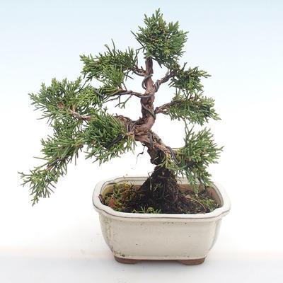 Outdoor bonsai - Juniperus chinensis - Chinese juniper VB2020-75 - 2