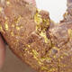 Ceramic shell 8 x 8 x 4 cm, color gray yellow - 2/3
