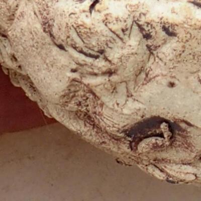 Ceramic Shell 5.5 x 6 x 4.5 cm, gray-brown - 2