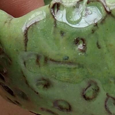 Ceramic shell 7.5 x 7 x 6 cm, color green - 2