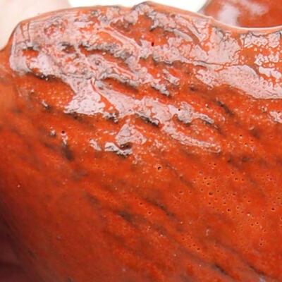Ceramic shell 8 x 6 x 5 cm, color orange - 2